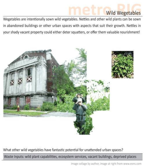 wild-wegetables